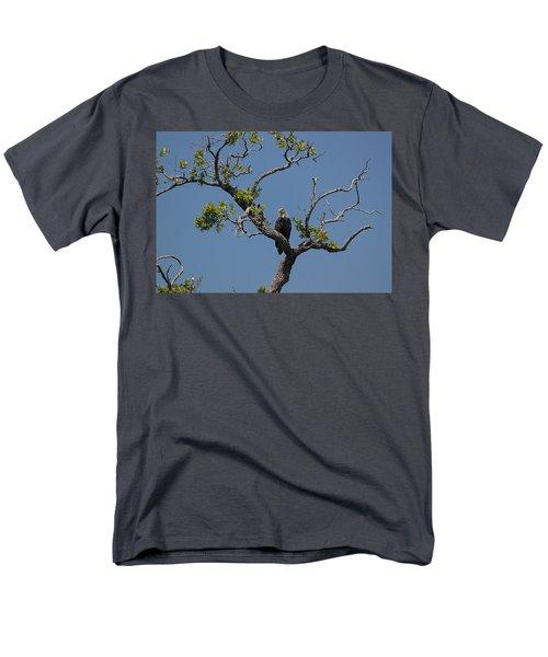 Yawkey Wildlife Reguge - American Bald Eagle Men's T-Shirt  (Regular Fit) by Suzanne Gaff