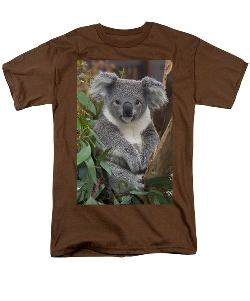 Koala Phascolarctos Cinereus Men's T-Shirt  (Regular Fit) by Zssd