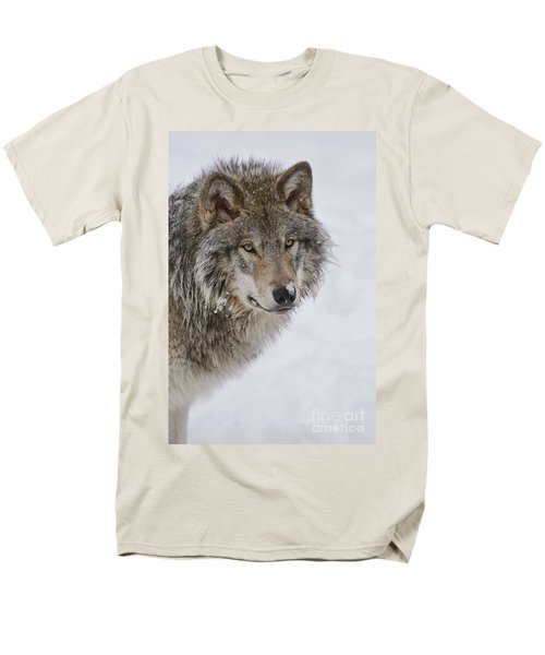 Timber Wolf Pictures Men's T-Shirt  (Regular Fit) by Wolves Only