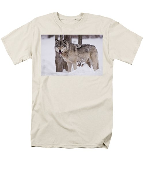Timber Wolf In Winter Men's T-Shirt  (Regular Fit) by Wolves Only