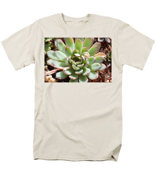 Men's T-Shirt  (Regular Fit) featuring the photograph A Young Succulent Plant by Catherine Lau