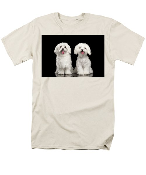 Two Happy White Maltese Dogs Sitting, Looking In Camera Isolated Men's T-Shirt  (Regular Fit) by Sergey Taran