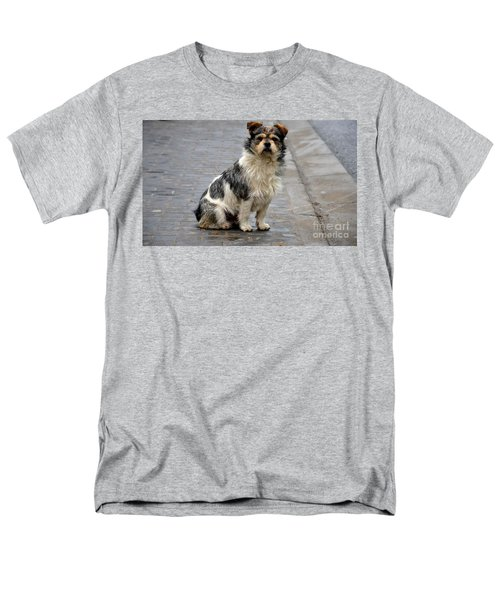 Cute Dog Sits On Pavement And Stares At Camera Men's T-Shirt  (Regular Fit) by Imran Ahmed