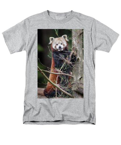 Portrat Of A Content Red Panda Men's T-Shirt  (Regular Fit) by Greg Nyquist