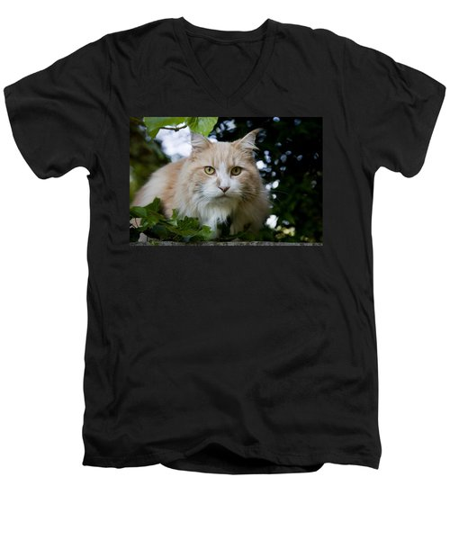 Cream And White Cat Men's V-Neck T-Shirt