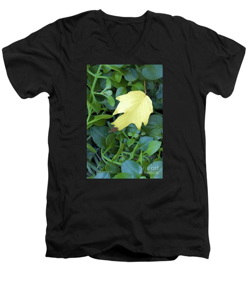 Fallen Yellow Leaf Men's V-Neck T-Shirt