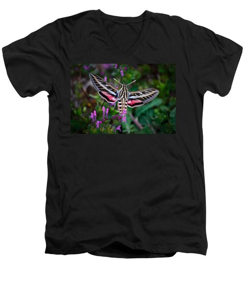 Hummingbird Moth Print Men's V-Neck T-Shirt