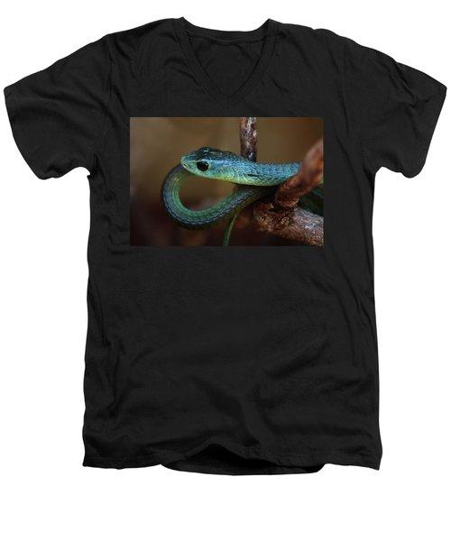 Boomslang Men's V-Neck T-Shirt