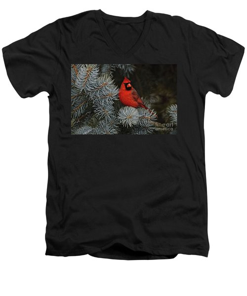 Northern Cardinal In Spruce Tree. Men's V-Neck T-Shirt