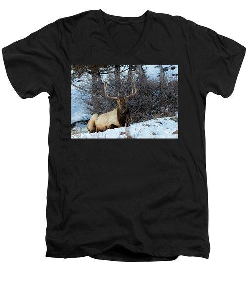 Rocky Mountain Elk Men's V-Neck T-Shirt
