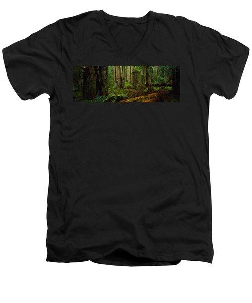 Trees In A Forest, Hoh Rainforest Men's V-Neck T-Shirt