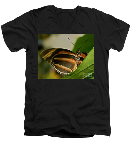 Men's V-Neck T-Shirt featuring the photograph Butterfly by Olga Hamilton