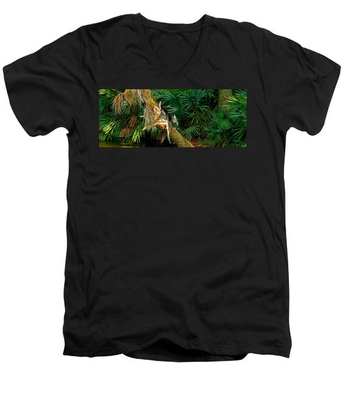 Anhinga Anhinga Anhinga On A Tree Men's V-Neck T-Shirt by Panoramic Images