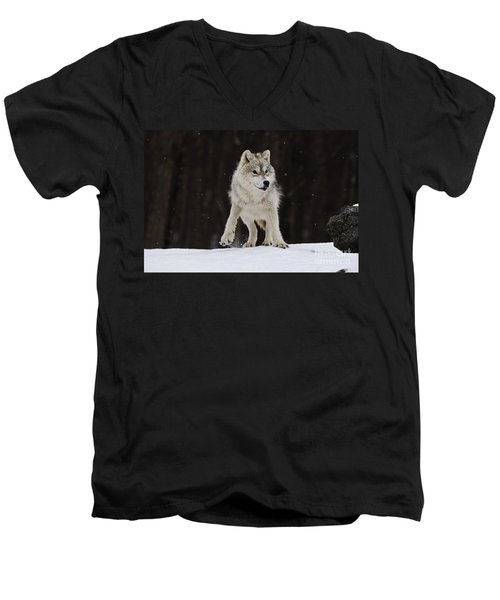 Men's V-Neck T-Shirt featuring the photograph Arctic Wolf by Wolves Only