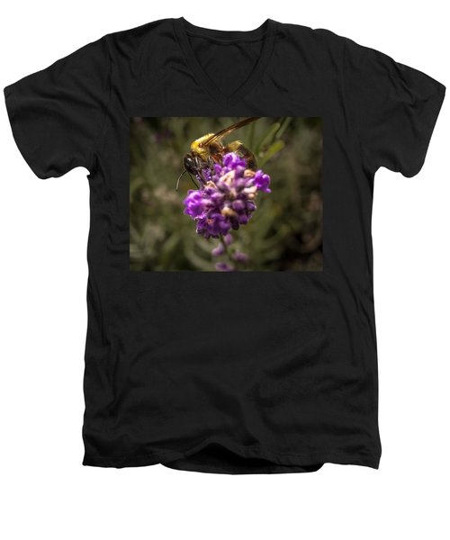 Carpenter Bee On A Lavender Spike Men's V-Neck T-Shirt