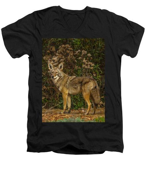 The Coyote Men's V-Neck T-Shirt