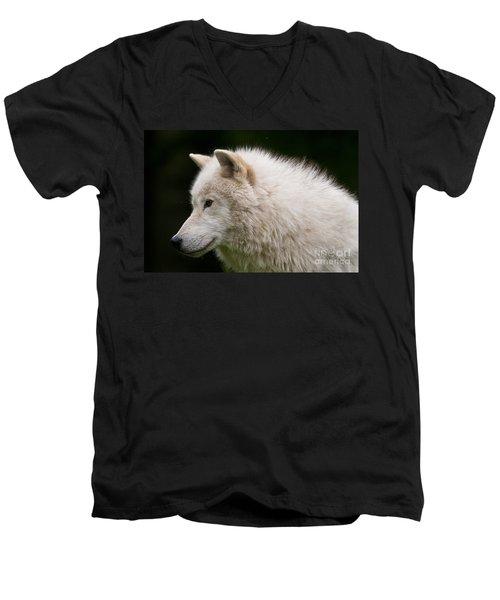 Arctic Wolf Men's V-Neck T-Shirt