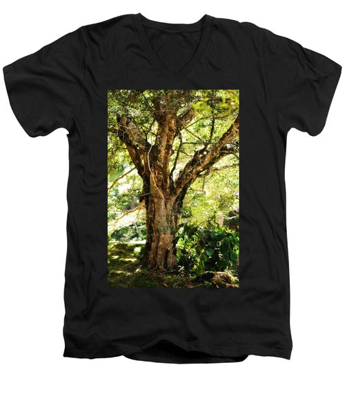 Kingdom Of The Trees. Peradeniya Botanical Garden. Sri Lanka Men's V-Neck T-Shirt