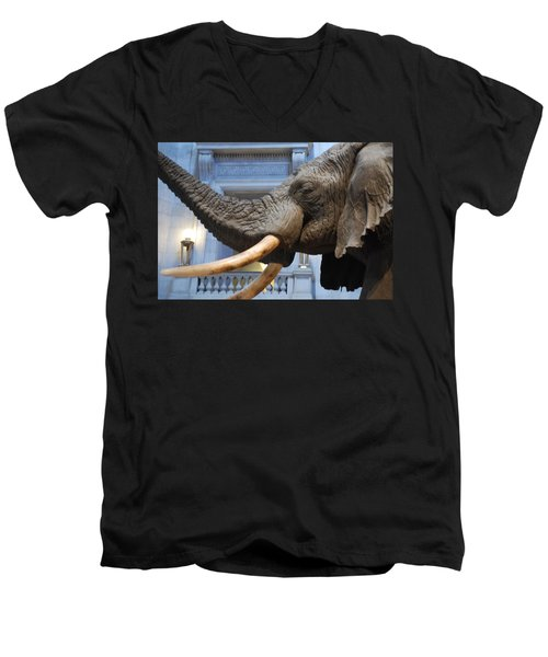 Bull Elephant In Natural History Rotunda Men's V-Neck T-Shirt