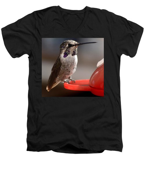 Men's V-Neck T-Shirt featuring the photograph Female Anna's Sitting On Perch by Jay Milo