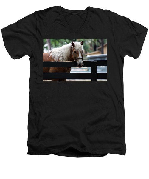 A Hilton Head Island Horse Men's V-Neck T-Shirt