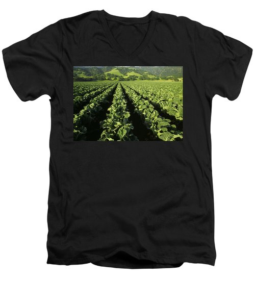 Agriculture - Mid Growth Cauliflower Men's V-Neck T-Shirt by Ed Young