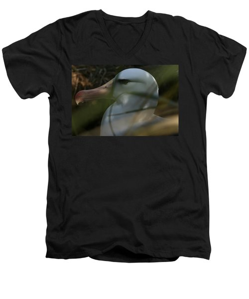 Men's V-Neck T-Shirt featuring the photograph Albatross by Amanda Stadther