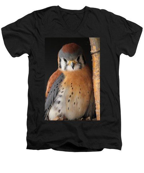 American Kestrel Men's V-Neck T-Shirt by Diane Alexander