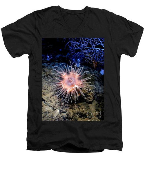 Men's V-Neck T-Shirt featuring the photograph Anemone Sea Life Sea Ocean Water Underwater by Paul Fearn
