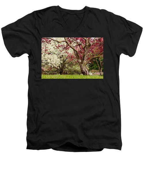 Apple Blossom Colors Men's V-Neck T-Shirt by Joe Mamer