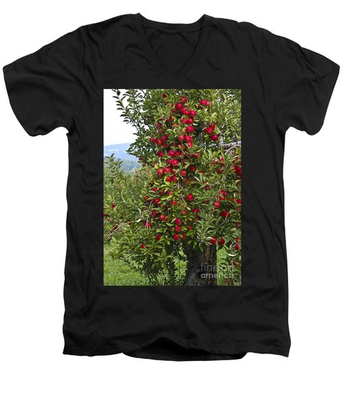 Apple Tree Men's V-Neck T-Shirt