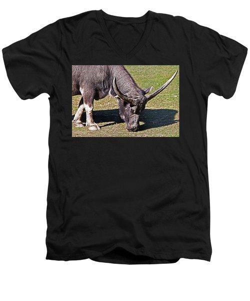 Asian Water Buffalo  Men's V-Neck T-Shirt