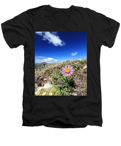 Aster Alpinus Men's V-Neck T-Shirt