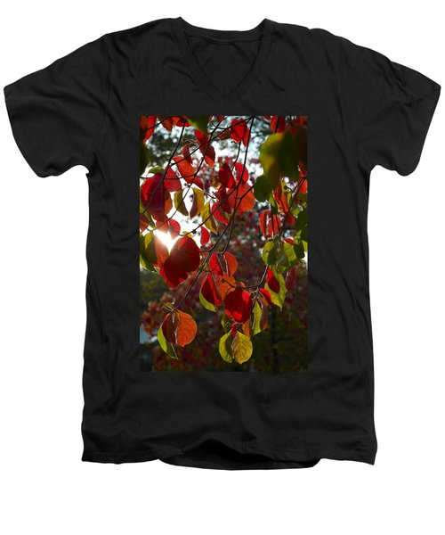 Autumn Dogwood In Evening Light Men's V-Neck T-Shirt by Michele Myers