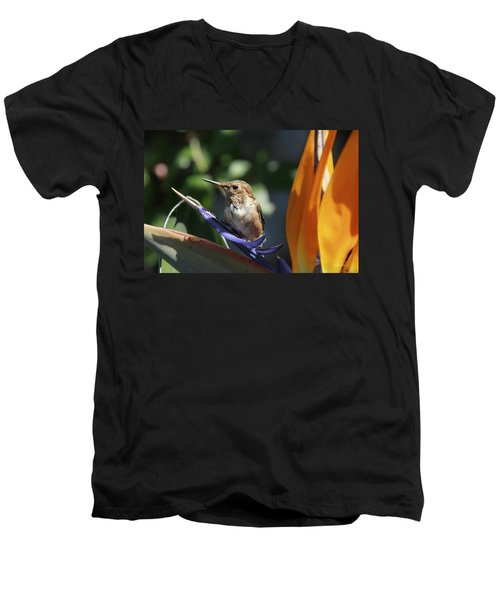 Baby Hummingbird On Flower Men's V-Neck T-Shirt