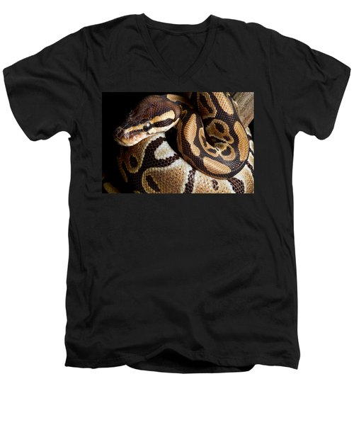 Ball Python Python Regius Men's V-Neck T-Shirt by David Kenny