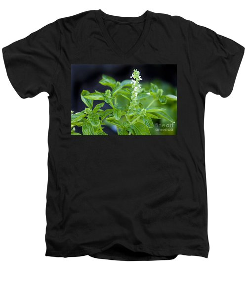 Men's V-Neck T-Shirt featuring the photograph Basil With White Flowers Ready For Culinary Use by David Millenheft