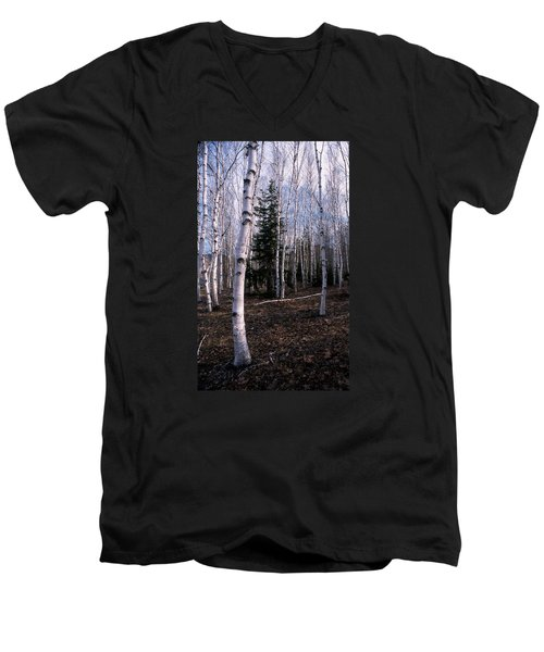 Birches Men's V-Neck T-Shirt by Skip Willits