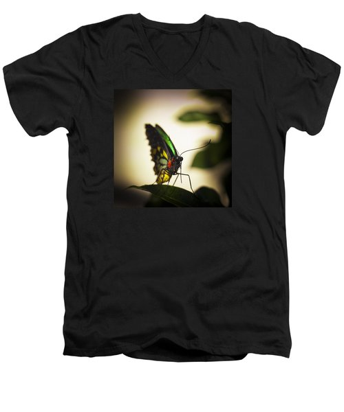 Birdwing Butterfly Men's V-Neck T-Shirt