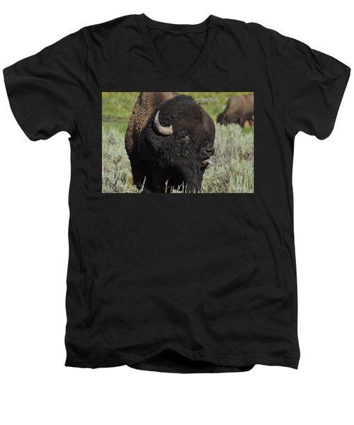 Bison Men's V-Neck T-Shirt