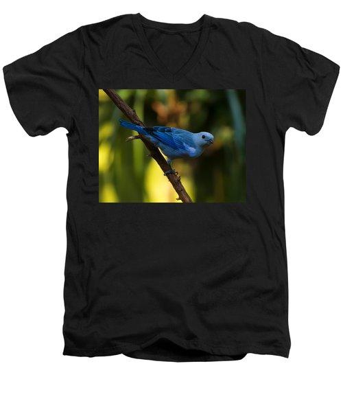 Blue Grey Tanager Men's V-Neck T-Shirt by Chris Flees