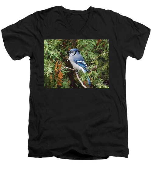 Men's V-Neck T-Shirt featuring the photograph Blue Jay In Cedar Tree by Brenda Brown