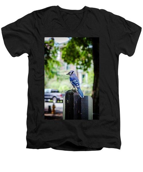 Men's V-Neck T-Shirt featuring the photograph Blue Jay by Sennie Pierson