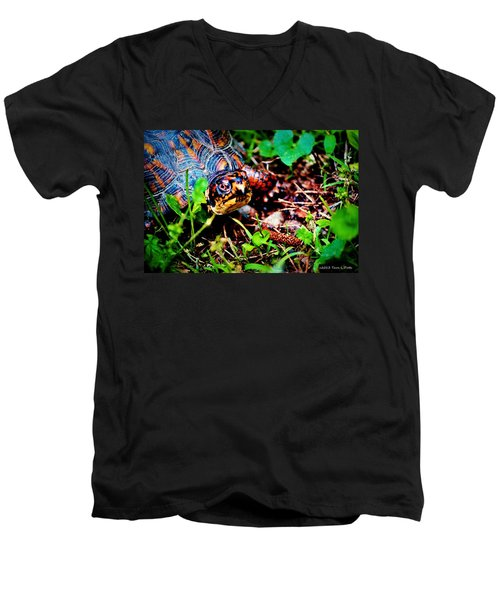 Box Turtle Men's V-Neck T-Shirt by Tara Potts