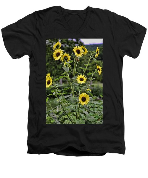 Bright Sunflowers Men's V-Neck T-Shirt by Denise Romano