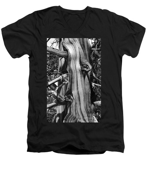 Men's V-Neck T-Shirt featuring the photograph Bristle-cone Pine-2 by Mae Wertz