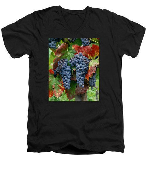 5b6374-cabernet Sauvignon Grapes At Harvest Men's V-Neck T-Shirt