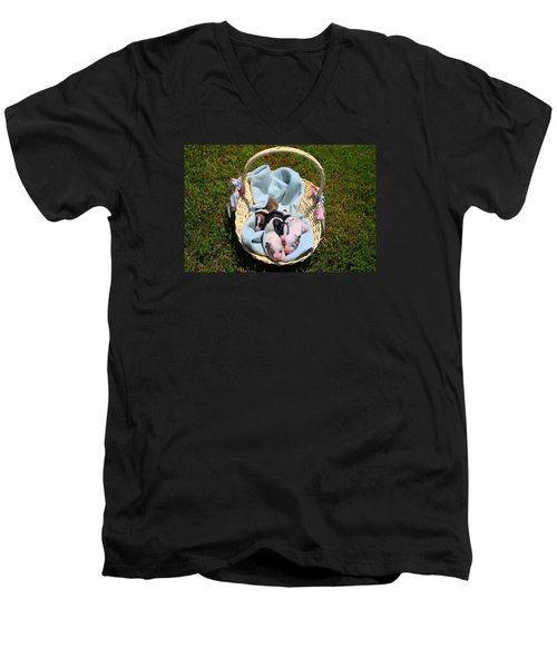 Calicos Pups At Two Days Men's V-Neck T-Shirt by Kathryn Meyer