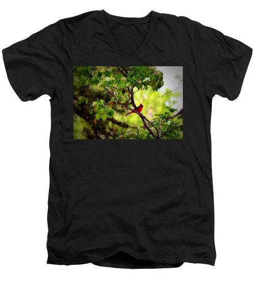 Cardinal In Dogwood Men's V-Neck T-Shirt by Tara Potts
