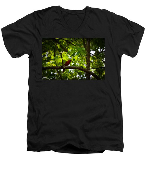 Cardinal In The Trees Men's V-Neck T-Shirt by Tara Potts